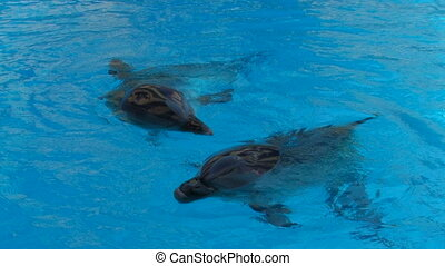 Happy dolphins are swimming
