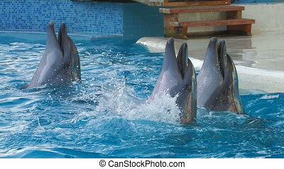 Dolphins performing in a show