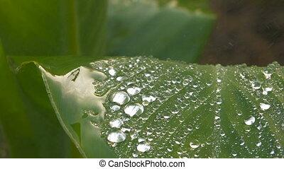 Waterdrops flowing down green leaf