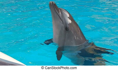 Dolphin diving in blue water