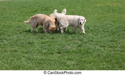 four dogs on grass in summer park