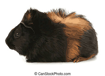 Silkie Guinea Pig Color Vector Illustration - Profile of a...