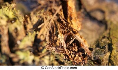 colonia, rojo, hormigas, árbol, sumamente, primer...