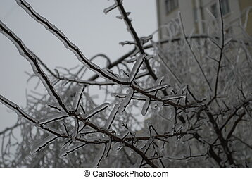 tree branch in thick layer of ice is anomaly natural...