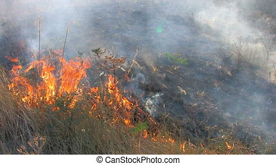 Burning grass, closeup, Canon XH A1, 1080p, 25fps,...