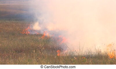 Burning meadow, Canon XH A1, 1080p, 25fps, progressive scan...