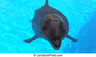 Dolphin swimming in blue water, closeup, Canon XH A1, 1080p,...