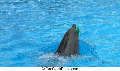 Peforming Dolphins playing with green balls, closeup, Canon...