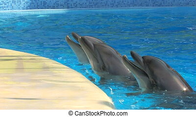 Three smiling dolphins playing