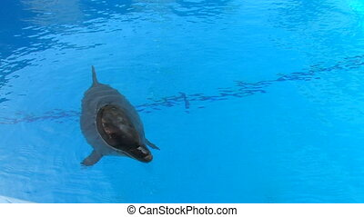 Dolphin swimming in blue water, , closeup, Canon XH A1,...