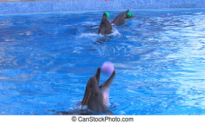 Three dolfins playing with balls in blue water, closeup,...
