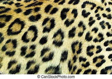 nieve, Leopardo, Irbis, piel, textura