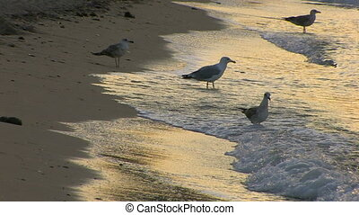 Seagulls on a sandy beach