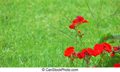 Red flowers and green grass