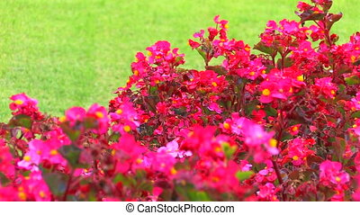 Pink flowers and green grass