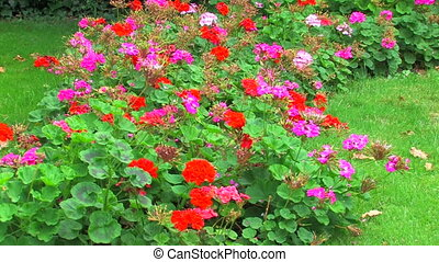Multi colored flower bed and green grass background, Canon...