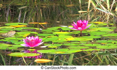 little frog and shining pink water