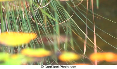 Water surface with reeds, closeup, Canon XH A1, 1080p,...