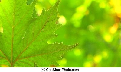 Single fresh green leaf