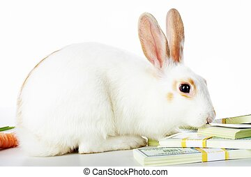 Rabbit and dollars - Image of cautious rabbit smelling...