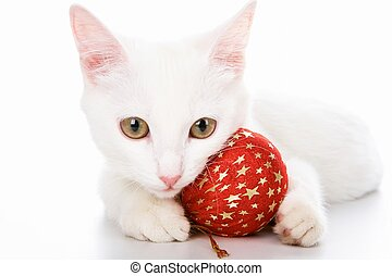 Cat with red toy - Image of white cat with red toy ball in...