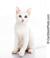 Cat with ribbon - Image of white cat decorated with red...