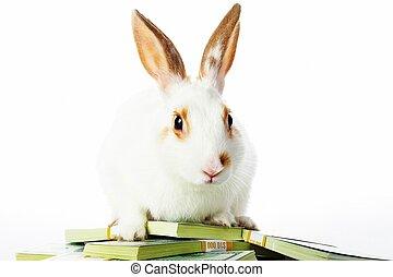 Rabbit with money