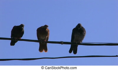 Three doves on power line on blue sky background, closeup,...