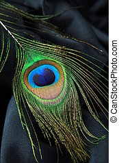 Feather of a peacock on a black silk background