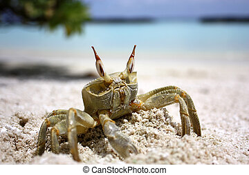Crab on the beach at the sunny day
