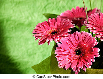 pink gerber flowers over abstract green backgrounds