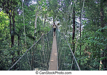 Canopy walk - The canopy walk in the taman negara jungle...
