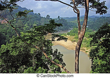 Jungleview - View from the canopy walk over Taman Negara...