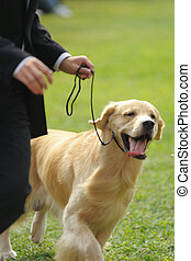 Master playing with golden retriever dog