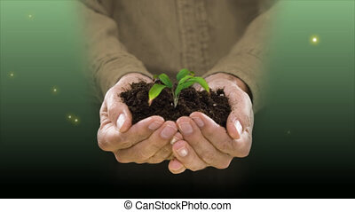 holding a plant and soil - plant growing in hands of man...