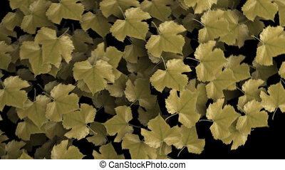 Autumn Leafs Revealer & alpha - autumn leaves wiper revealer...