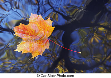 autumn leaf on the water - Shot of the autumn maple leaf on...
