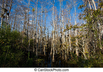 Everglades trees - Cypress and other vegetation from the...