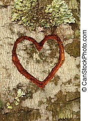 Carvet Heart - Heart Carved In Tree Trunk