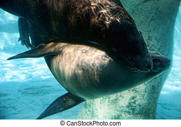 Sea Lion Caress