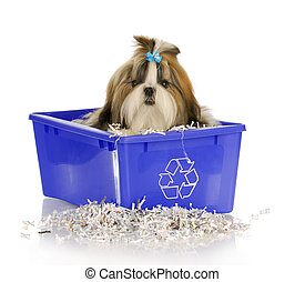 puppy in recycle bin - adorable shih tzu puppy sitting in...