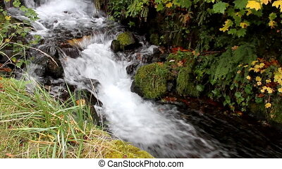 Fall Leaves in White Water Stream 8