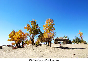 Landscape of golden trees and wooden house in the desert