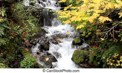 Fall Leaves in White Water Stream 7