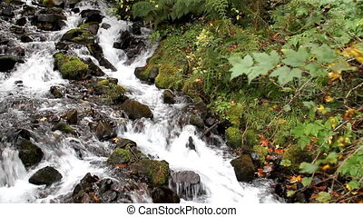 Fall Leaves in White Water Stream 6