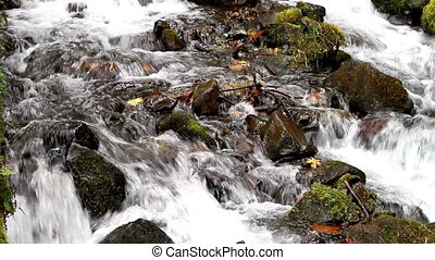 Fall Leaves in White Water Stream 5