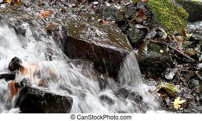 Fall Leaves in White Water Stream 4