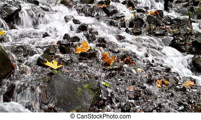 Fall Leaves in White Water Stream 3 - Fall Leaves in White...