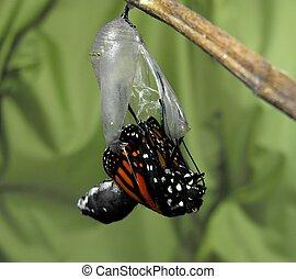 Buttefly, Se resbalar, libre