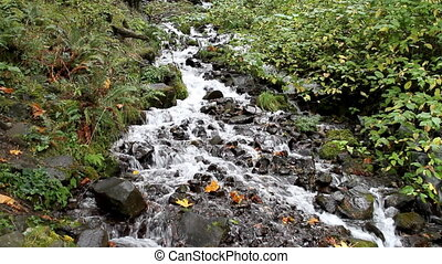 Fall Leaves in White Water Stream 2